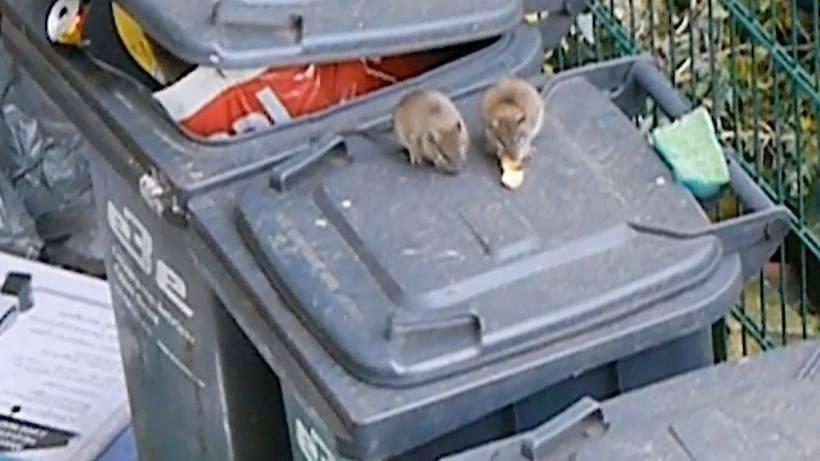 Rattenplage An Schrottimmobilie In Essen Altendorf Waz De Essen
