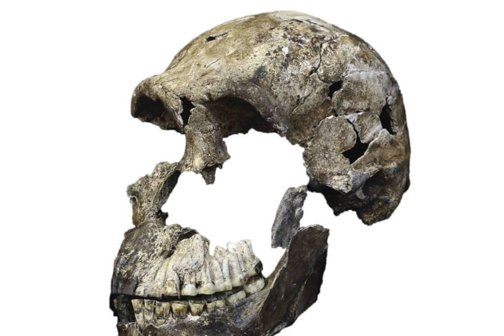 Homo naledi datiert Daten-Websites in Panama