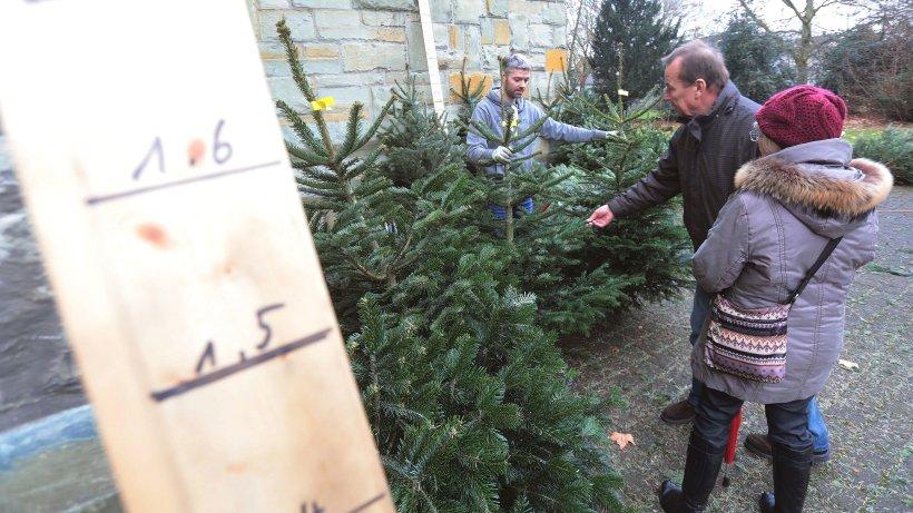 worauf man beim kauf des weihnachtsbaums achten muss leben. Black Bedroom Furniture Sets. Home Design Ideas