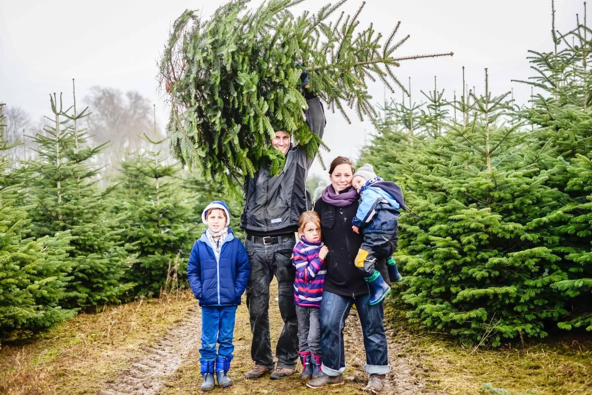 Tannenbaum Selber Schlagen.Wo Bochumer Weihnachtsbaume Selbst Schlagen Konnen Waz De