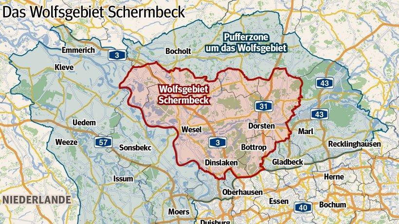Gladbeck ist jetzt Teil des ersten Wolfsgebietes in NRW