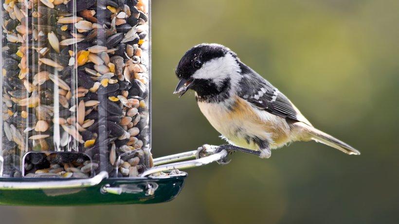 So füttert man Garten-Vögel zur Winterzeit richtig