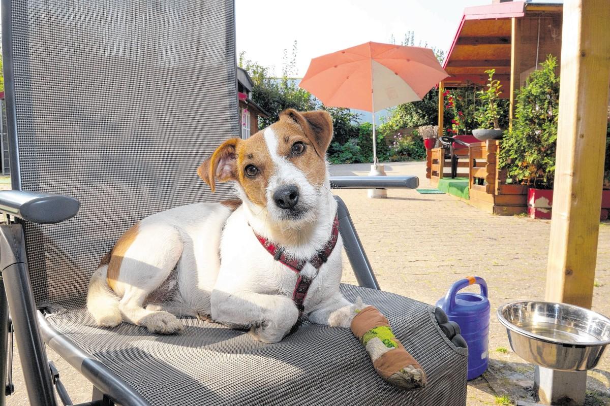 owalo design: Hunde Zu Verschenken Duisburg