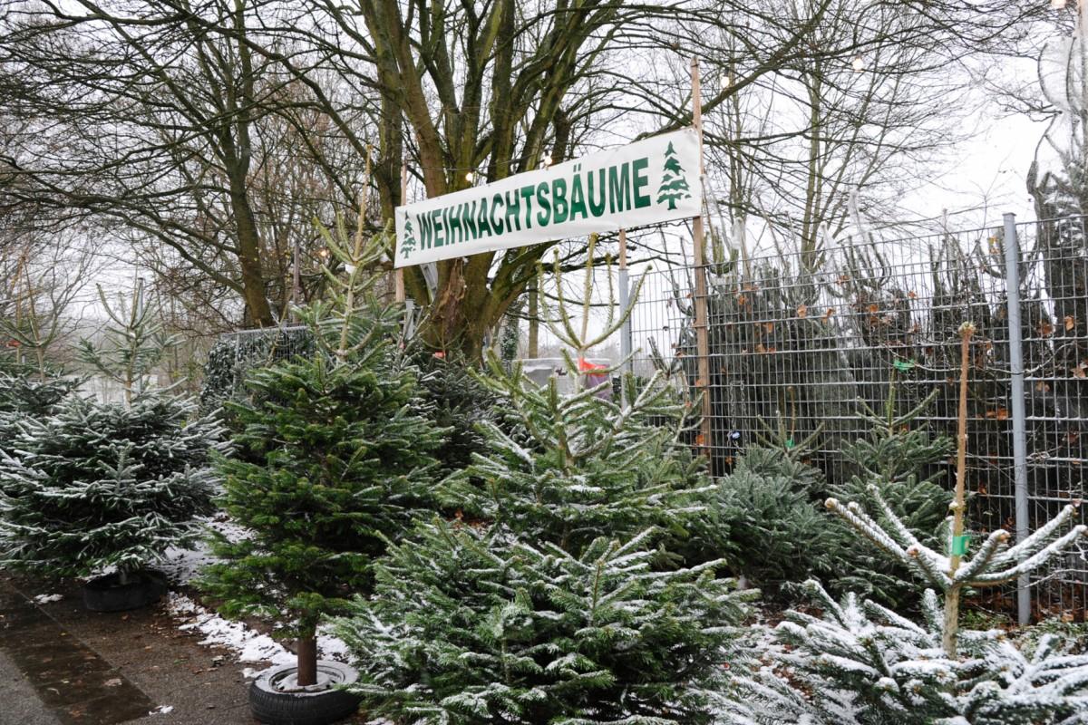 Tannenbaum Selber Schlagen Düsseldorf.So Finden Sie Den Richtigen Tannenbaum