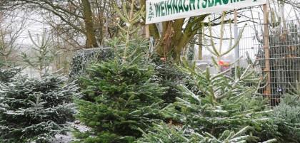 Wann Weihnachtsbaum Aufstellen.Weihnachtsbaum Schon Am Tag Vor Dem Schmücken Aufstellen Waz De