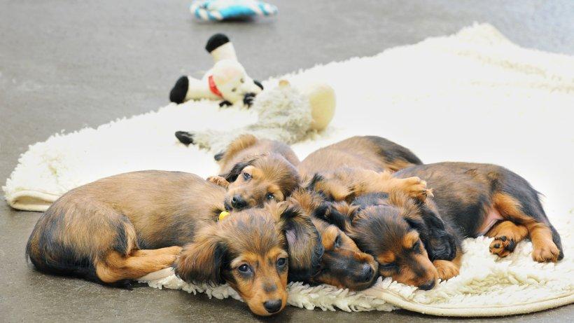 zoo zajac verkaufte im ersten jahr 400 statt 1000 welpen