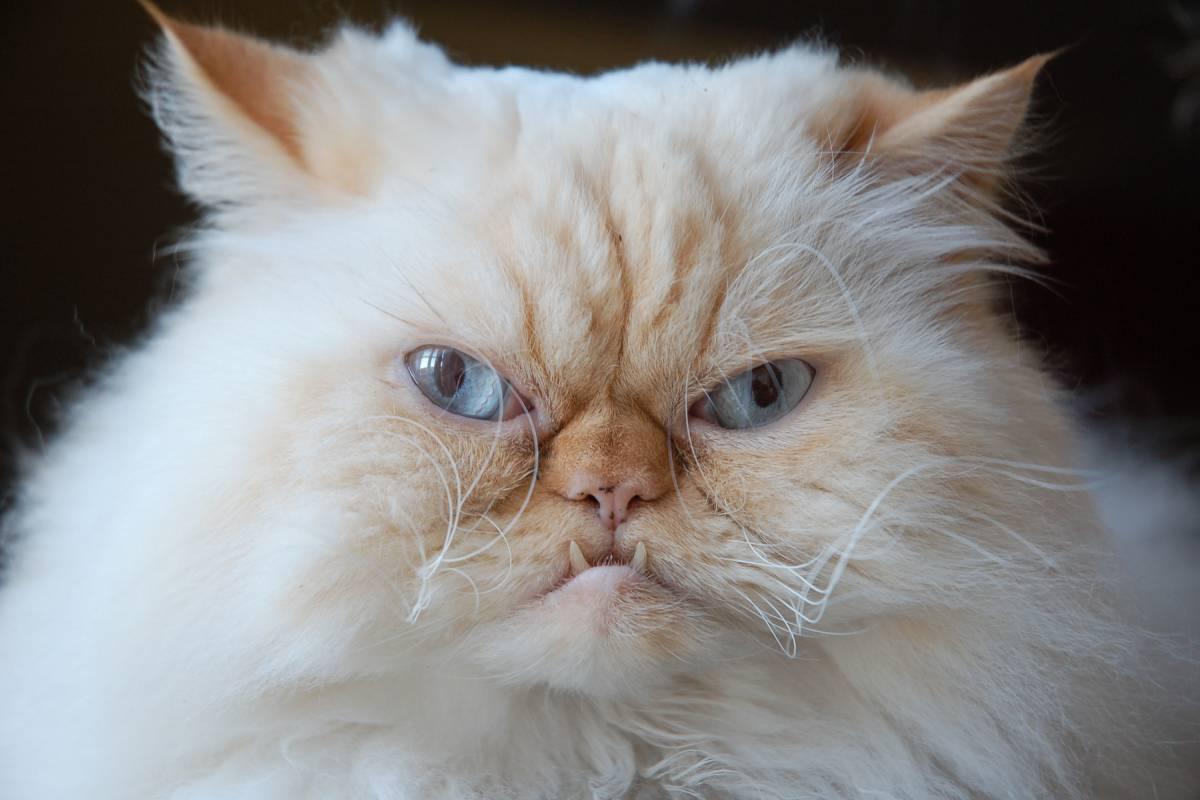 Einschläfern katze
