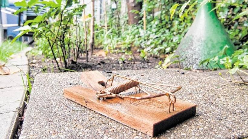 Am Gartenzaun Nagt Die Ratte Waz De Oberhausen