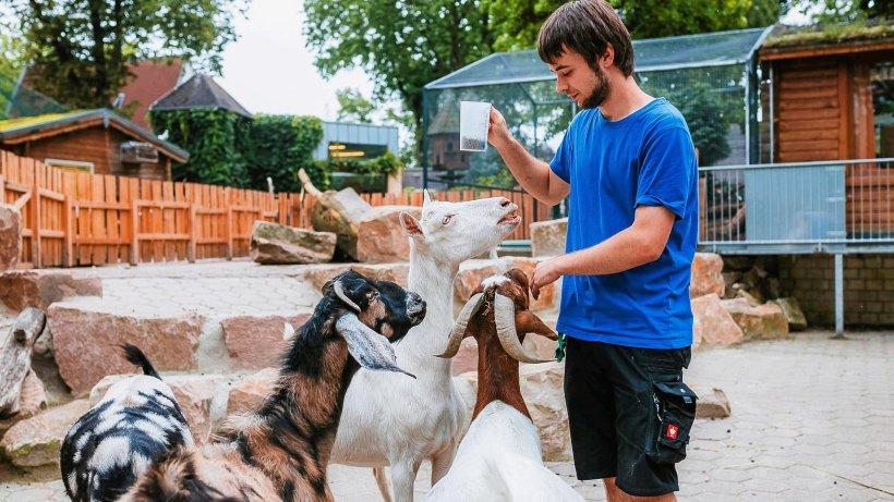 Spannender Einblick: So ernährt der Tierpark Bochum