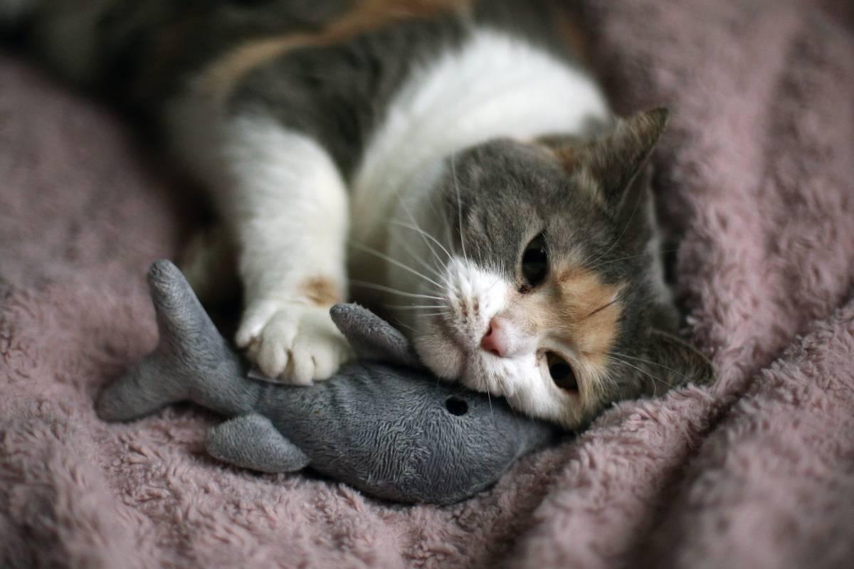 Sie müssen Katzen zu lieben