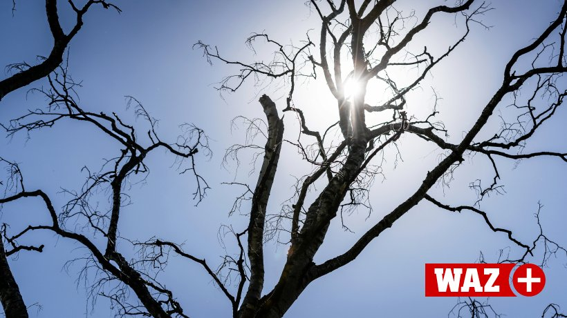 Hitze in Herne: Grüne sorgen sich um kranke Straßenbäume
