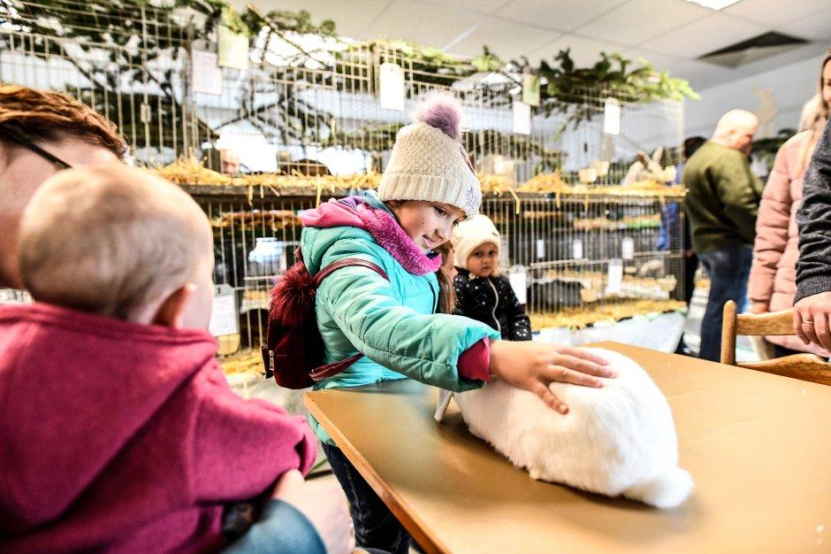 Kaninchen vielfältiger Farben und Formen wurden bei der Züchterschau des Ennepe-Ruhr-Kreises am 23. und 24. November in Sprockhövel präsentiert.