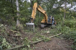 Natur: Wirtschaftsbetriebe verteidigen die Rodung am Dickelsbach