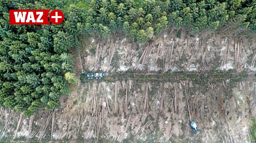 Wald-Erfolg-f-r-Waldbesitzer-CDU-und-SPD-wollen-Baumpr-mie