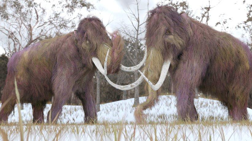 mammut und co wie forscher ausgestorbene tiere wiederbeleben wollen panorama. Black Bedroom Furniture Sets. Home Design Ideas