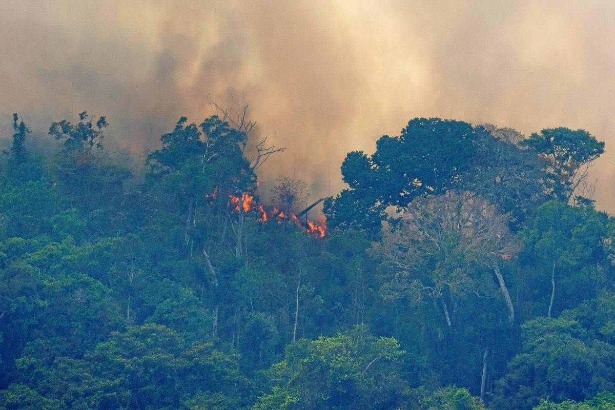 Schweden Waldbrände Karte.Amazonas Regenwald Karten Zeigen Ausmaß Des Feuers In Brasilien