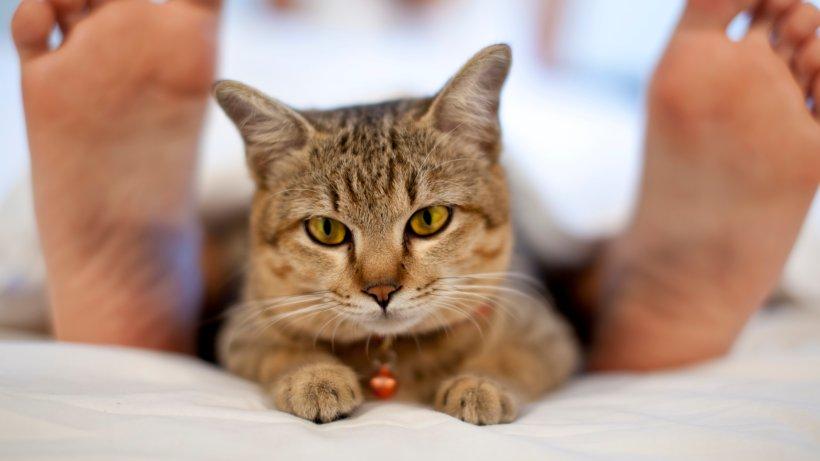 Ziemlich Katze 5 Draht Bestellung Ideen - Die Besten Elektrischen ...