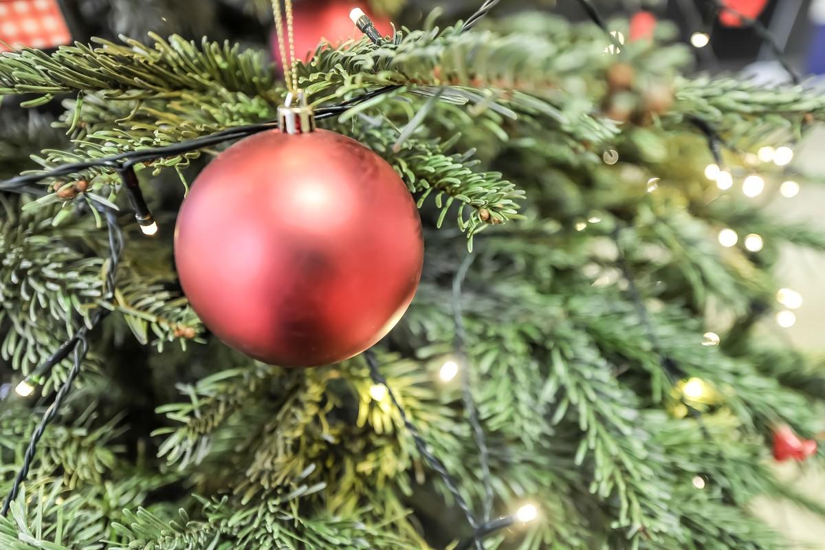 Weihnachtsbaum Kaufen Essen.Ungeziefer Im Weihnachtsbaum Vermiest Essener Die Festtage Waz De