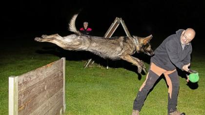 Da durften sie noch; Jörg Lingemann trainiert auf dem Gelände der Ortsgruppe Langenberg mit seinem Schäferhund Bond. Jetzt sind auch die Hundesportler in Corona-Zwangspause.