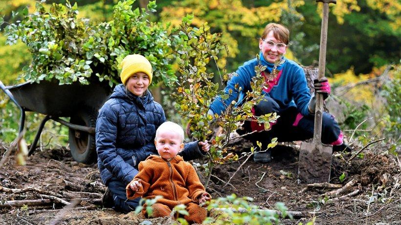 Witten: Freiwillige pflanzen 8000 Bäume im Vormholzer Wald
