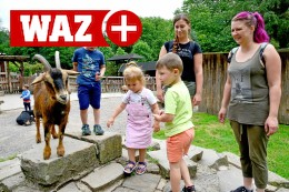 Witten: Ziegen im Streichelzoo freuen sich über Besucher