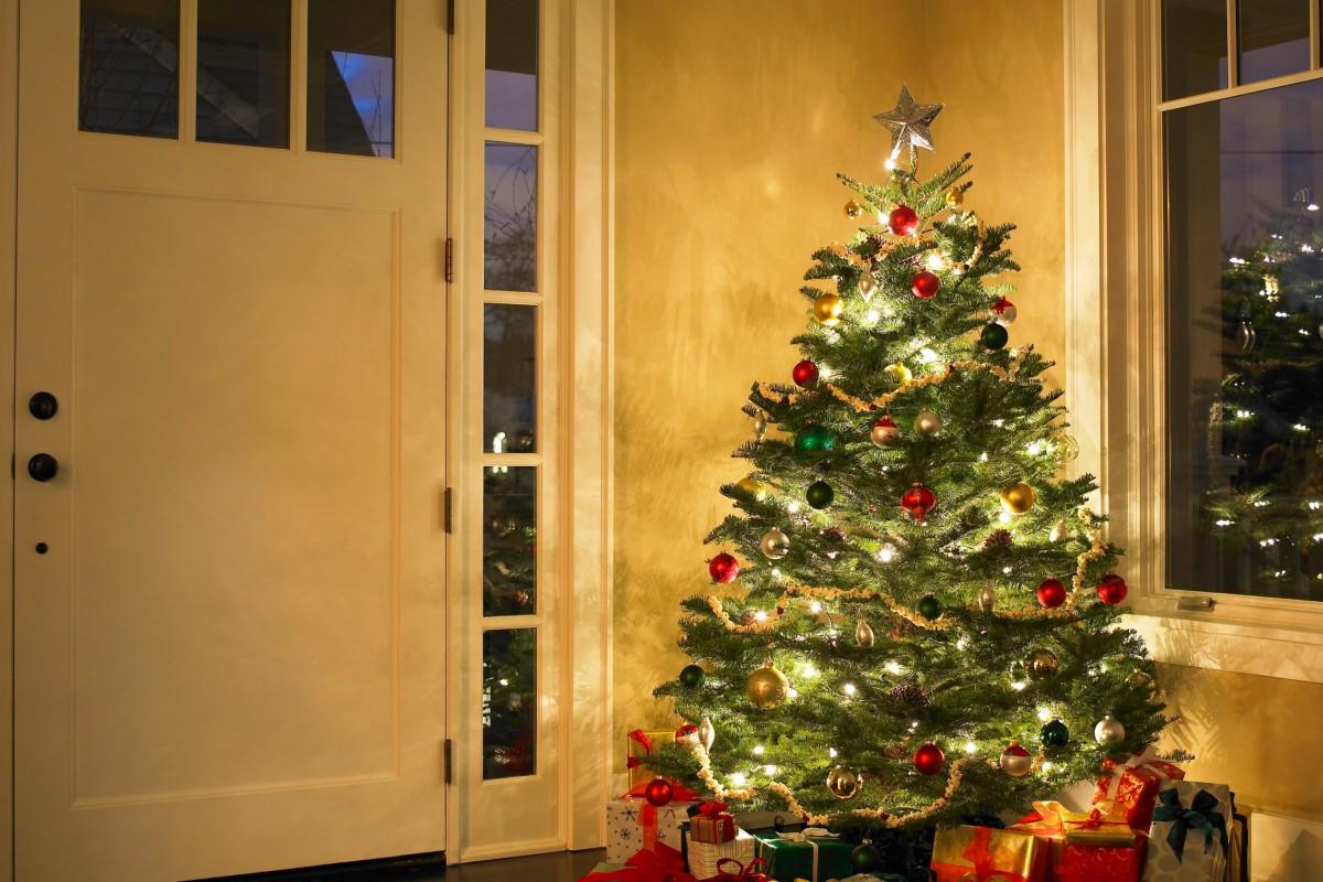 Bvb Weihnachtsbaum.Weihnachtsbaum Im Topf Als Alternative Im Zimmer Waz De Wohnen